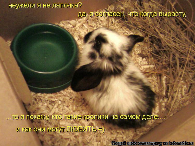 Котоматрица: неужели я не лапочка? да, я согласен, что когда вырасту,  ...то я покажу, кто такие кролики на самом деле.... и как они могут ЛЮБИТЬ =)