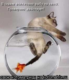 Котоматрица: В сказке волк ловил рыбу на хвост. Проверено, действует!