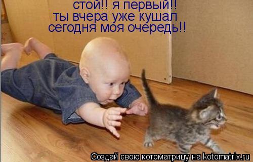 Котоматрица: стой!! я первый!! ты вчера уже кушал сегодня моя очередь!!