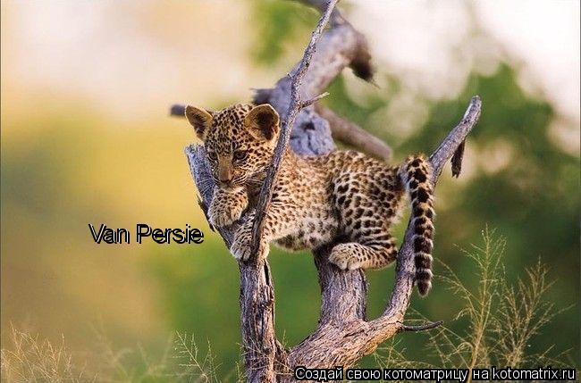 Котоматрица: Van Persie Van Persie