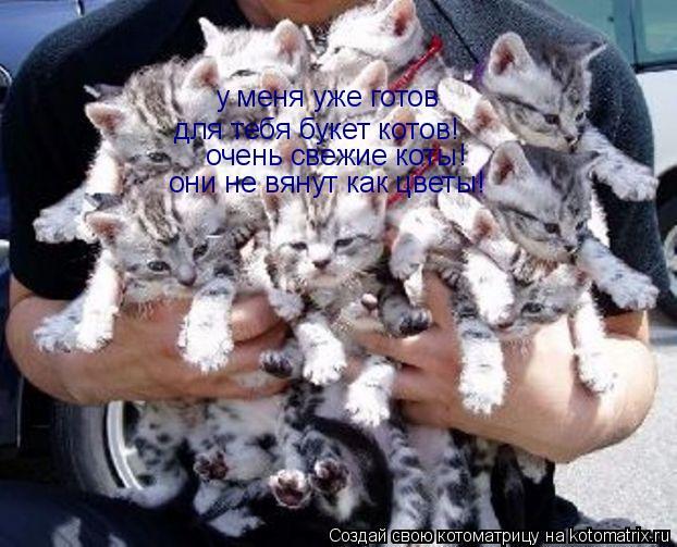 Котоматрица: у меня уже готов для тебя букет котов! очень свежие коты! они не вянут как цветы!