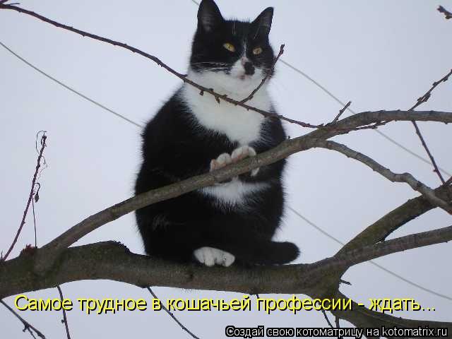 Котоматрица: Самое трудное в кошачьей профессии - ждать...