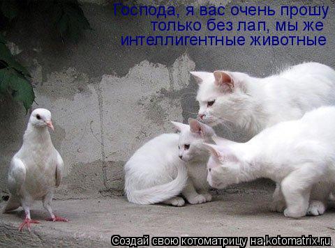Котоматрица: Господа, я вас очень прошу только без лап, мы же интеллигентные животные