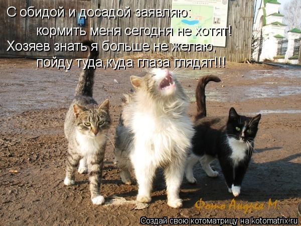 Котоматрица: С обидой и досадой заявляю: кормить меня сегодня не хотят! Хозяев знать я больше не желаю, пойду туда,куда глаза глядят!!!