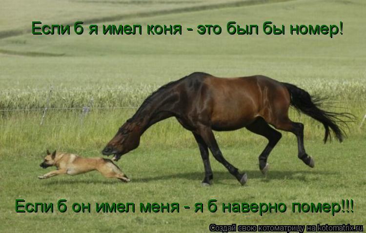 Котоматрица: Если б я имел коня - это был бы номер! Если б он имел меня - я б наверно помер!!!