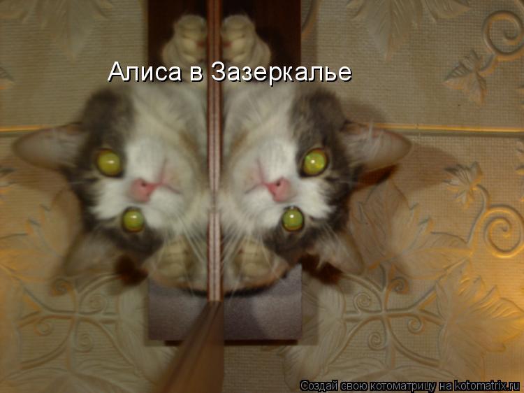 Котоматрица: Алиса в Зазеркалье