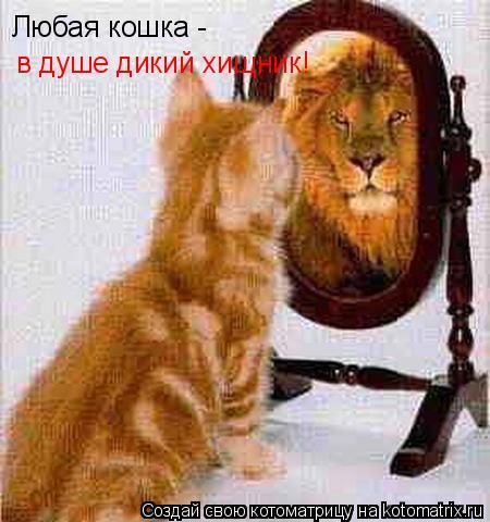 Котоматрица: Любая кошка -  в душе дикий хищник!