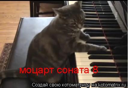 Котоматрица: моцарт соната 8