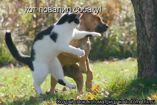 Котоматрица: кот повалил собаку!