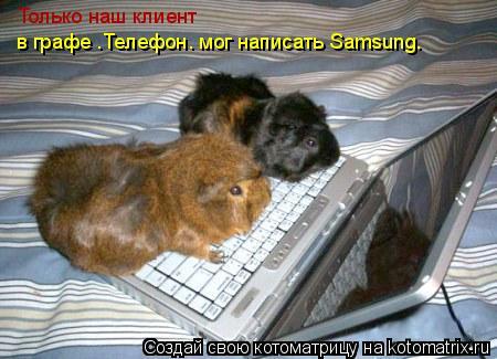 """Котоматрица: Только наш клиент  в графе """"Телефон"""" мог написать Samsung."""