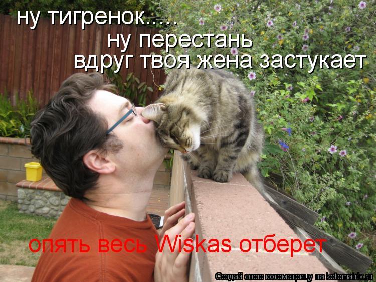 Котоматрица: ну тигренок..... ну перестань вдруг твоя жена застукает опять весь Wiskas отберет