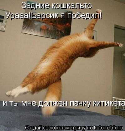 Котоматрица: Задние кошкальто Урааа!Барсик я победил! и ты мне должен пачку китикета