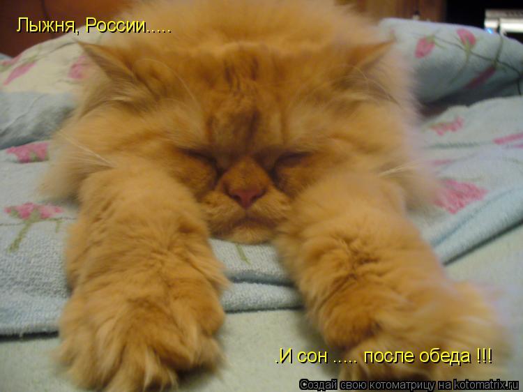 Котоматрица: Лыжня, России..... .И сон ..... после обеда !!!