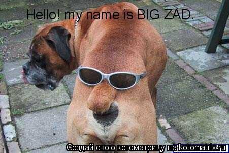 Котоматрица: Hello! my name is BIG ZAD.