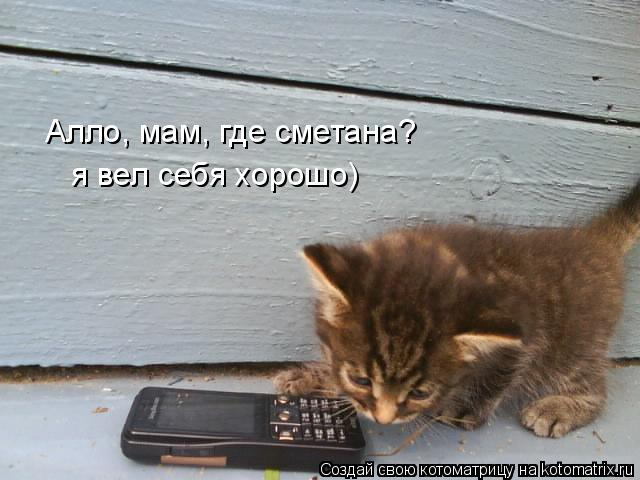 Котоматрица: Алло, мам, где сметана? я вел себя хорошо)