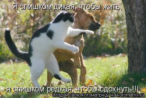 Котоматрица: Я слишком дикая, чтобы жить,    я слишком редкая, чтобы сдохнуть!!!
