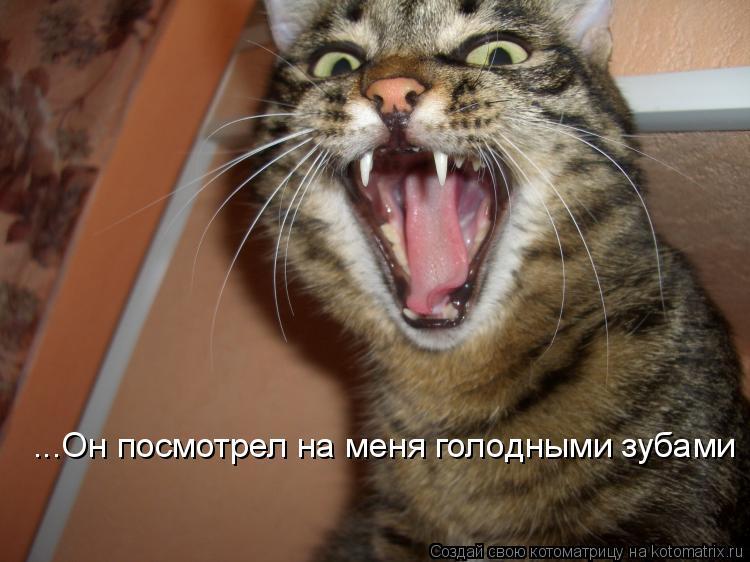 Котоматрица: ...Он посмотрел на меня голодными зубами