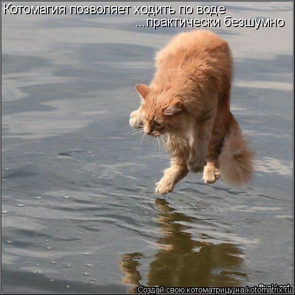 Котоматрица: Котомагия позволяет ходить по воде ...практически безшумно
