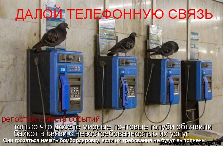 Котоматрица: ДАЛОЙ ТЕЛЕФОННУЮ СВЯЗЬ репортаж с места событий: только что доселе мирные почтовые голуби объявили байкот в связи с невостребованностью и