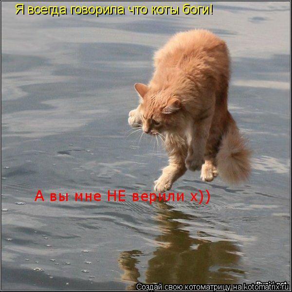 Котоматрица: Я всегда говорила что коты боги! А вы мне НЕ верили х))