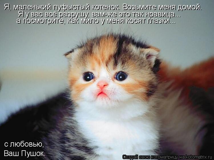 Котоматрица: Я, маленький пуфыстый котенок. Возьмите меня домой. Я у вас всё разрушу, вам-же это так нравица... а посмотрите, как мило у меня косят глазки...