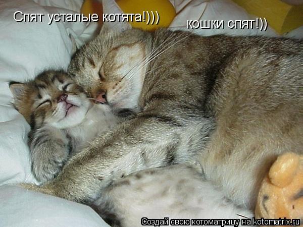 Котоматрица: Спят усталые котята!))) кошки спят!))