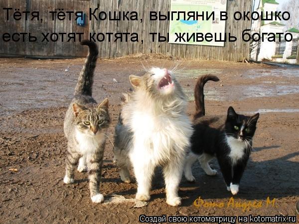Котоматрица: Тётя, тётя Кошка, выгляни в окошко есть хотят котята, ты живешь богато