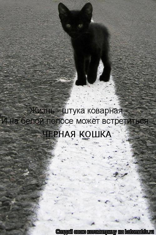 Котоматрица: Жизнь - штука коварная -  И на белой полосе может встретиться  ЧЕРНАЯ КОШКА