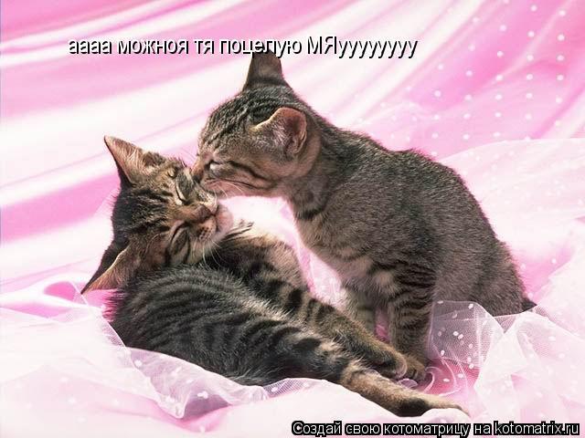 Котоматрица: аааа можноя тя поцелую МЯуууууууу
