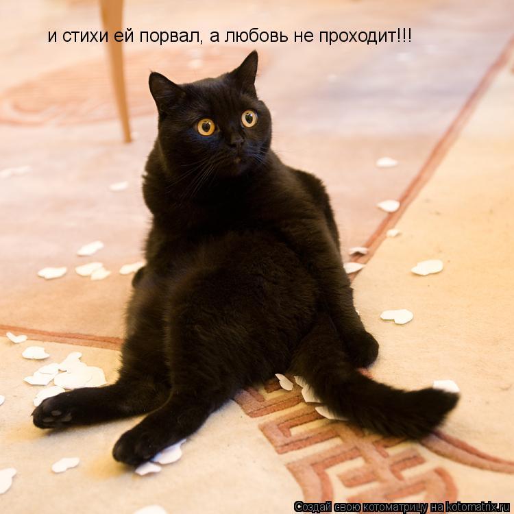 Котоматрица: и стихи ей порвал, а любовь не проходит!!!