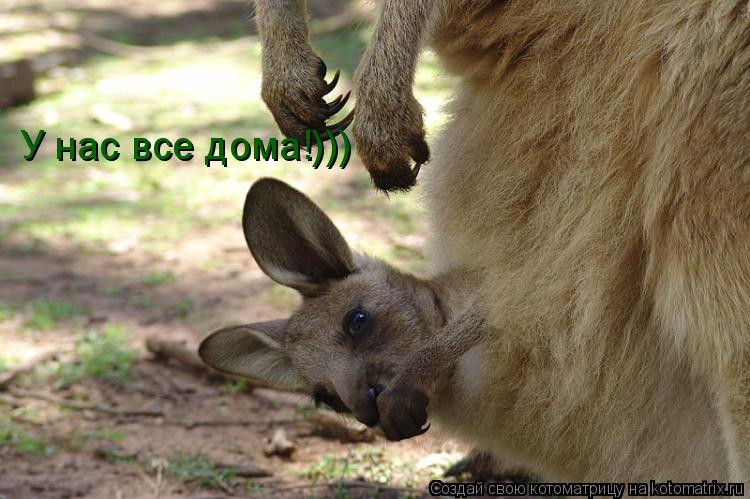 Котоматрица: У нас все дома!)))