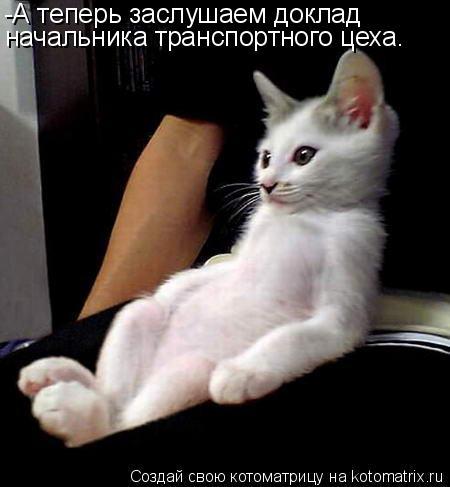 Котоматрица: -А теперь заслушаем доклад  начальника транспортного цеха.