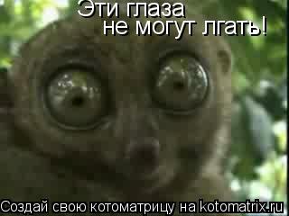 Котоматрица: Эти глаза не могут лгать!