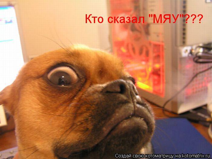 """Котоматрица: Кто сказал """"МЯУ""""???"""