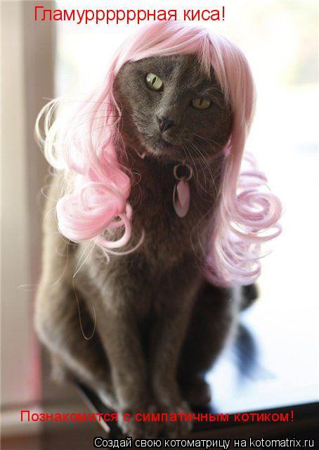 Котоматрица: Гламуррррррная киса! Познакомится с симпатичным котиком!