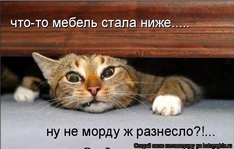 Котоматрица: что-то мебель стала ниже..... ну не морду ж разнесло?!...