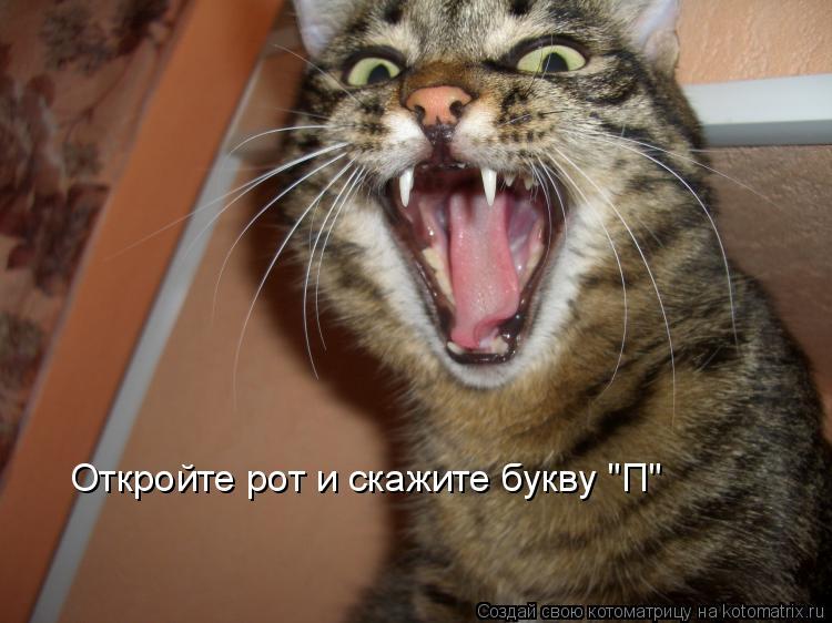 """Котоматрица: Откройте рот и скажите букву """"П"""""""