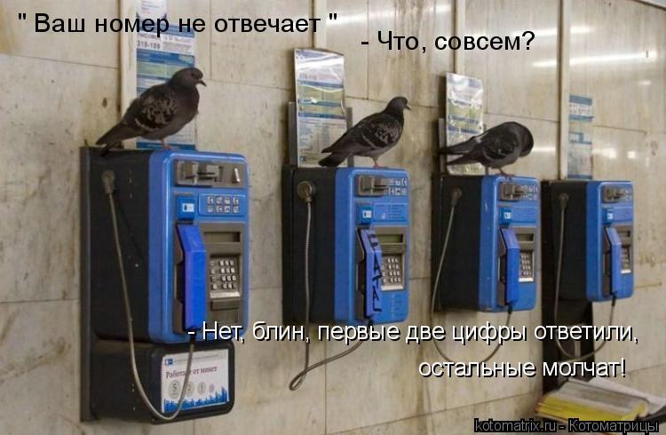 """Котоматрица: """" Ваш номер не отвечает """" - Что, совсем? - Нет, блин, первые две цифры ответили,  остальные молчат!"""