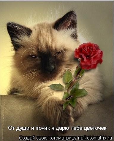 Котоматрица: От души и почик я дарю тебе цветочек