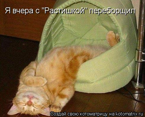 """Котоматрица: Я вчера с """"Растишкой"""" переборщил"""