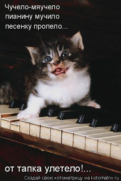 Котоматрица: Чучело-мяучело пианину мучило песенку пропело... от тапка улетело!...
