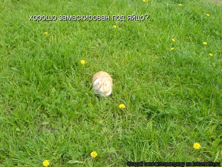 Котоматрица: хорошо замаскирован под яйцо?..