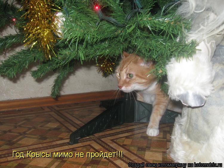 Котоматрица: Год Крысы мимо не пройдет!!!