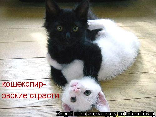 Котоматрица: кошекспир- овские страсти