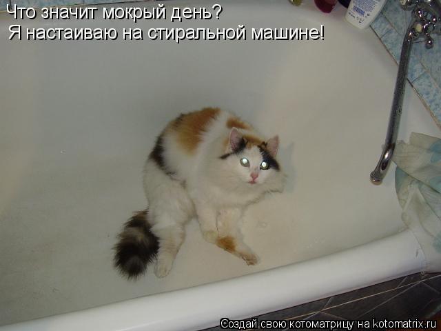 Котоматрица: Что значит мокрый день? Я настаиваю на стиральной машине!
