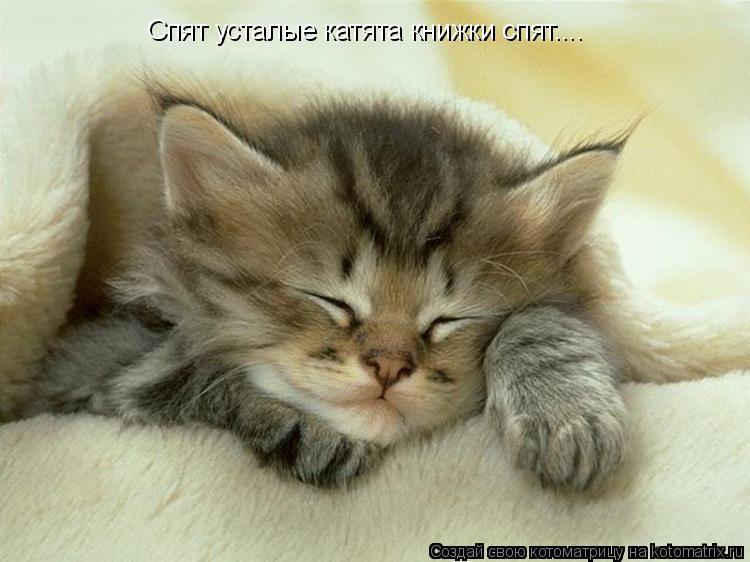 Котоматрица: Спят усталые катята книжки спят....