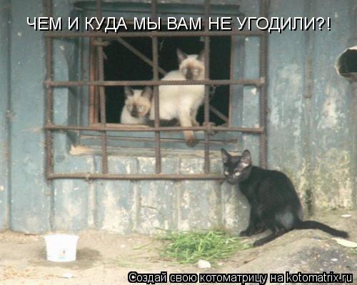 Котоматрица: ЧЕМ И КУДА МЫ ВАМ НЕ УГОДИЛИ?!