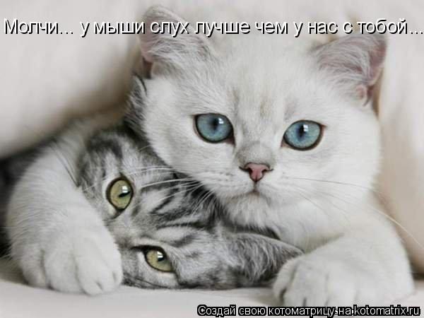 Котоматрица: Молчи... у мыши слух лучше чем у нас с тобой ...