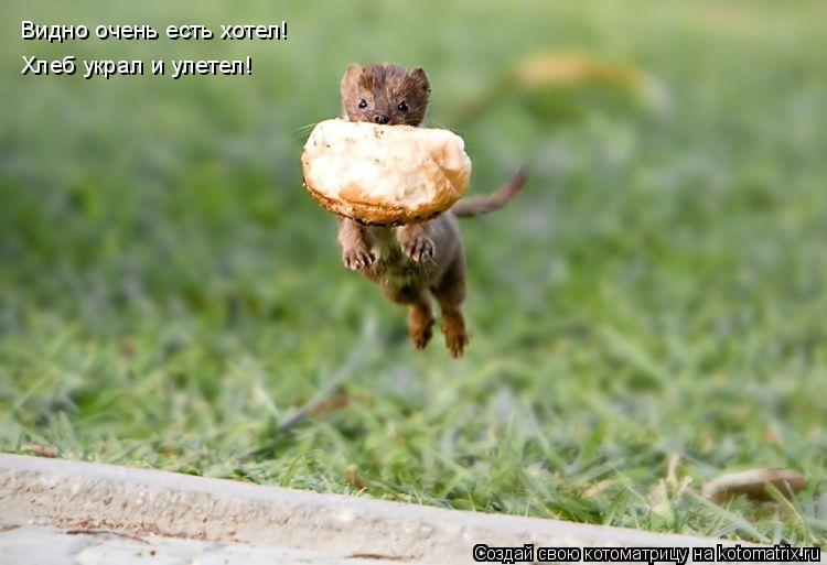 Котоматрица: Видно очень есть хотел! Хлеб украл и улетел!