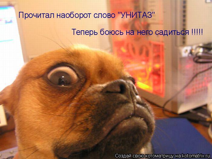 """Котоматрица: Прочитал наоборот слово """"УНИТАЗ"""" Теперь боюсь на него садиться !!!!!"""